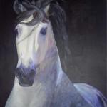 witte-paard