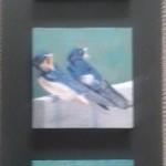 vogeltjes-van-jong-tot-volwassen