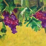 druivenverkocht